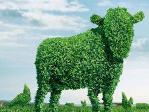 Вегетарианские блюда в ресторане- зелень